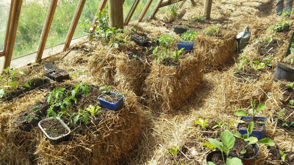 La serre bioclimatique des terre pailleux terre paille - Culture sur botte de paille ...
