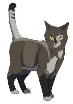 11;Puddlepaw- tom-cat