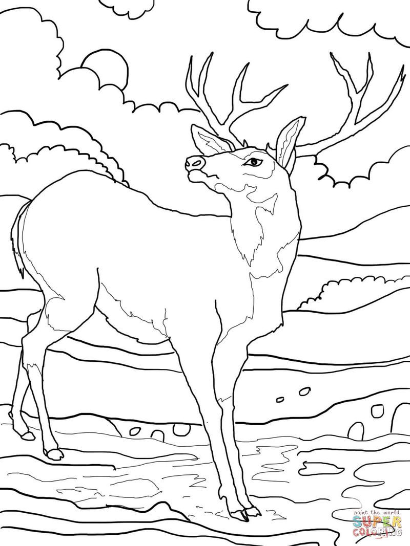 Http Www Bestcoloringpagesforkids Com Wp Content Uploads 2013 07 Coloring Page Deer Jpg Deer Drawing Deer Coloring Pages Forest Drawing