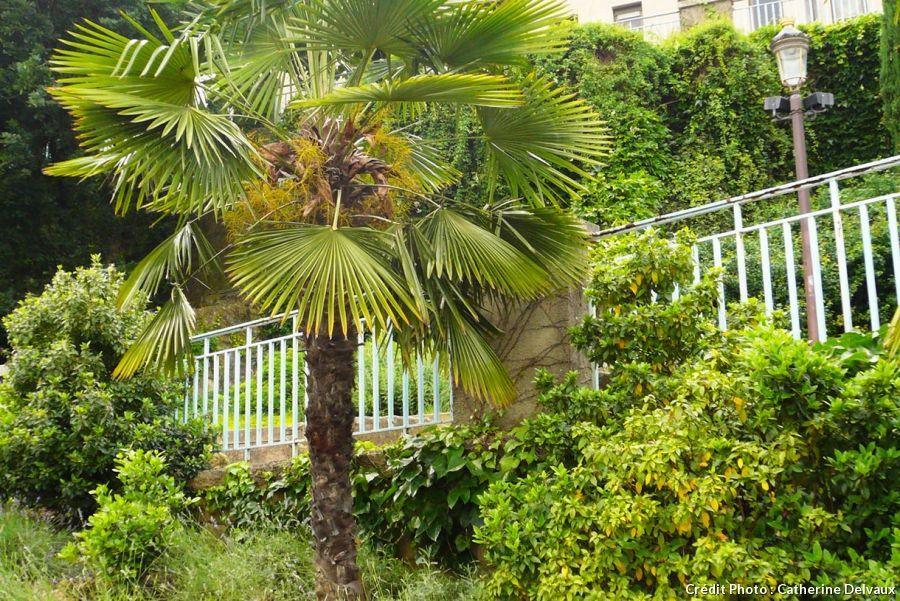 Un Jardin Exotique Comme A Miami Jardin Exotique Feuilles De