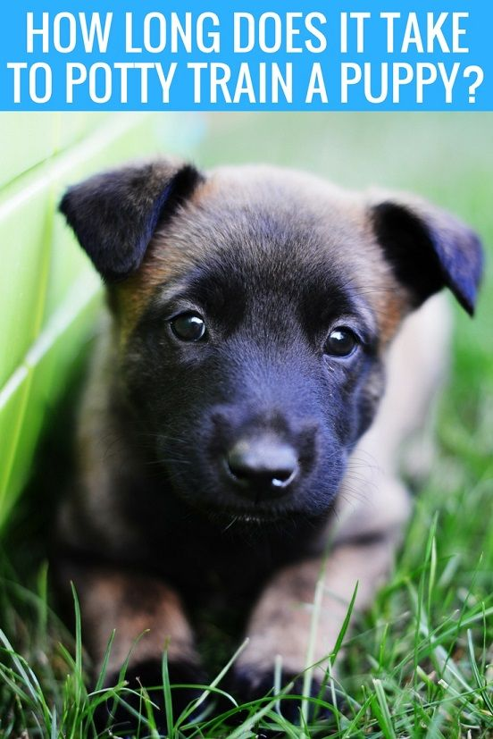 How Long Does It Take To Potty Train A Puppy That Mutt Puppy Training Potty Training Puppy Training Your Dog