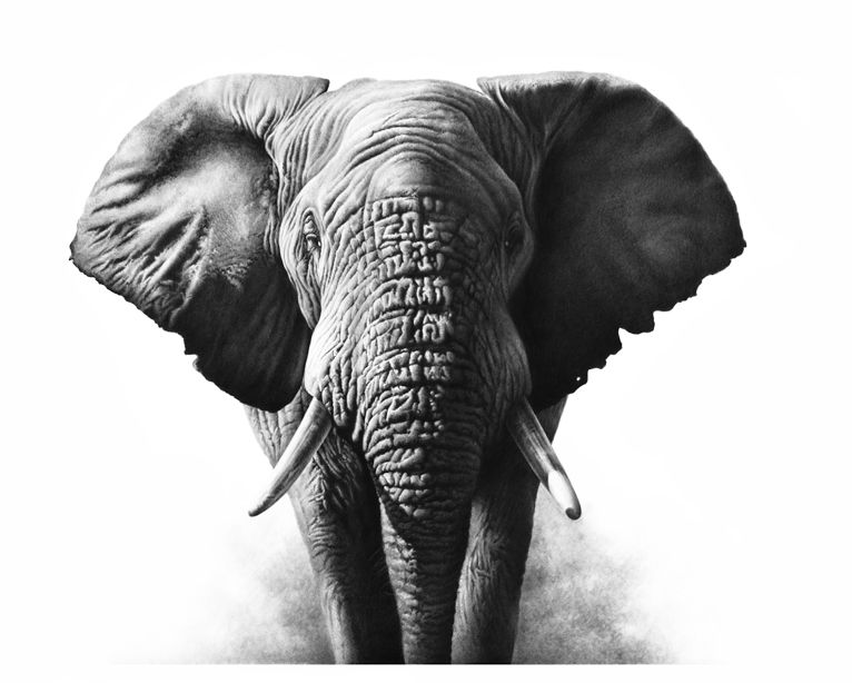 The Art Of Richard Symonds Find Tigers Elephants Lions - Stunning drawings of endangered wild animals by richard symonds