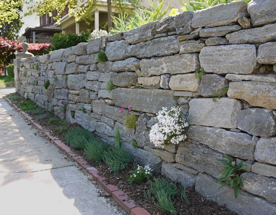 Rock garden plants in a dry stone wall The plant with white