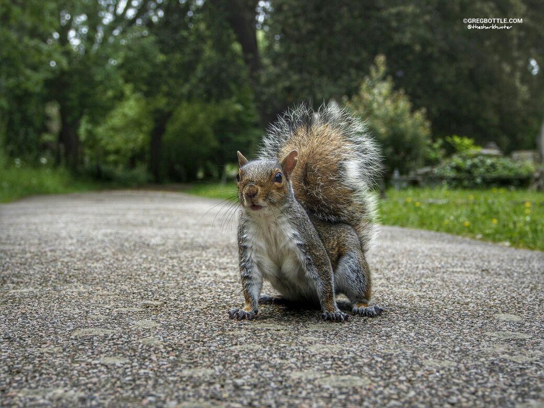 Squirrel saying hello squirrels wildlife by Greg