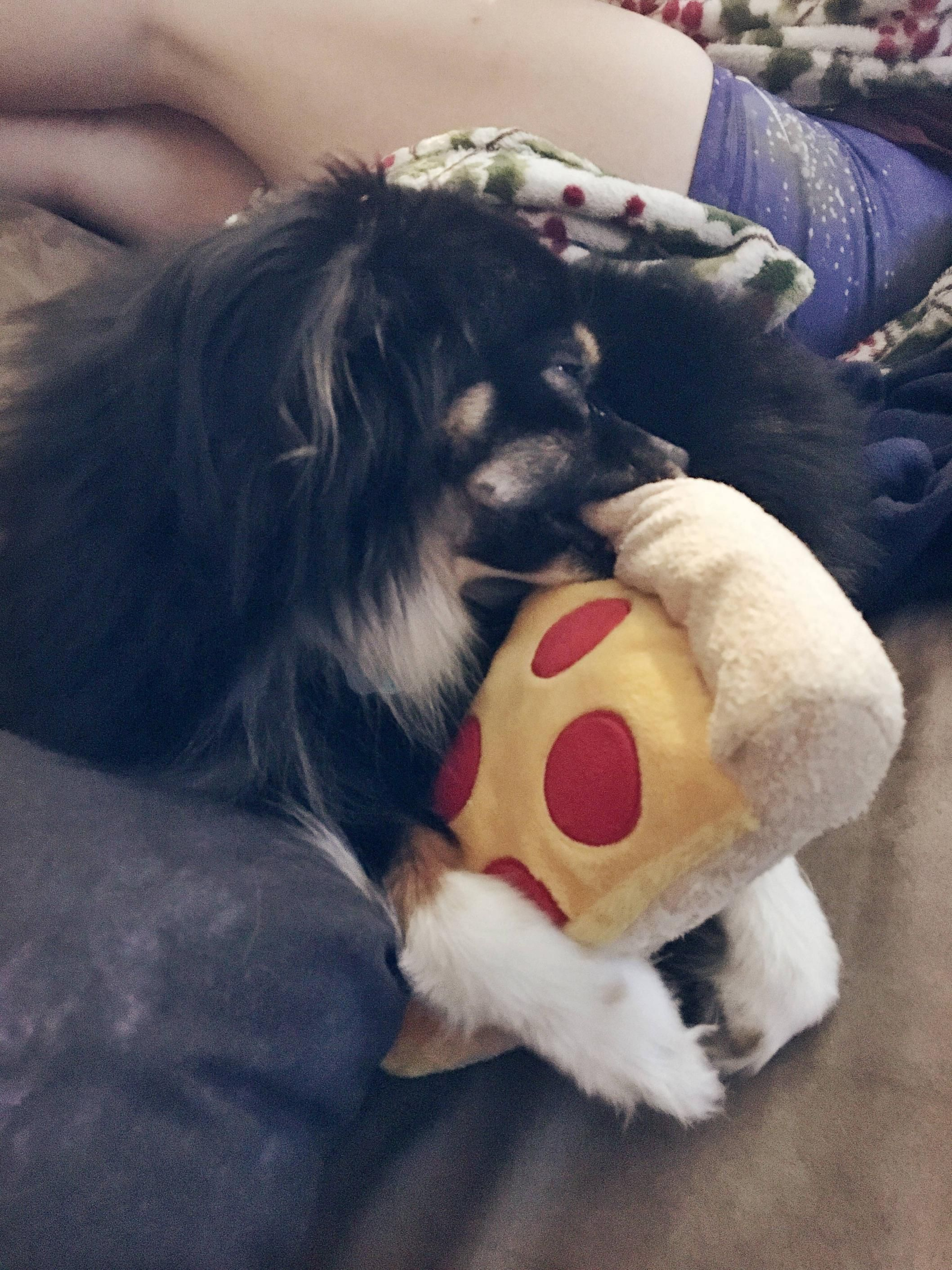Our Doggo Likes To Fall Asleep With Toys In His Mouth Http Ift