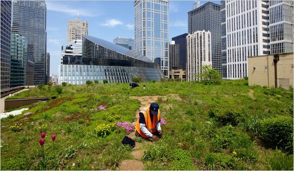 Chicago Adapts For A Warmer Wetter Future Green Roof On City Hall Green Roof Rooftop Climate Change
