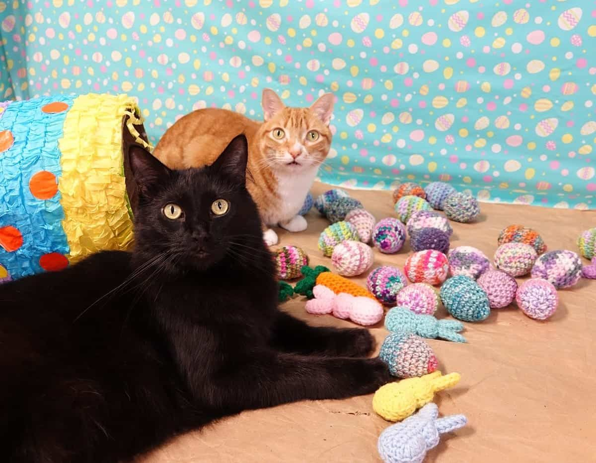 How to Celebrate Easter with Cats! in 2020 Cats, Cattery