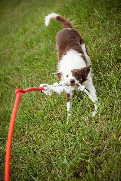 Yard Toys For Dogs : Tether tug spin backyard and toy