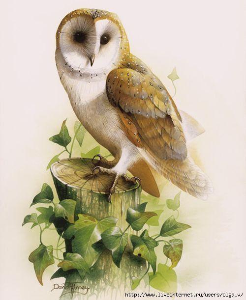 птичка сов открытки