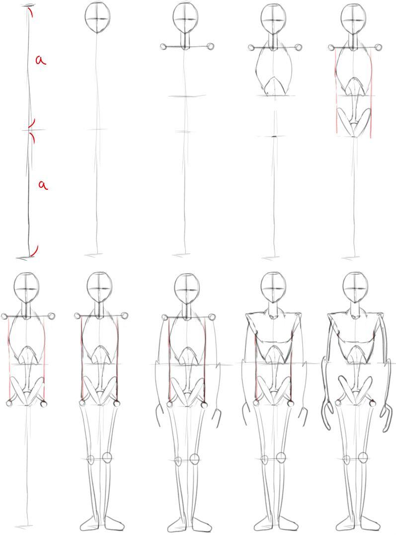 人間を描くための骸骨を組み立てよう 骨 解剖例 イラスト 人物