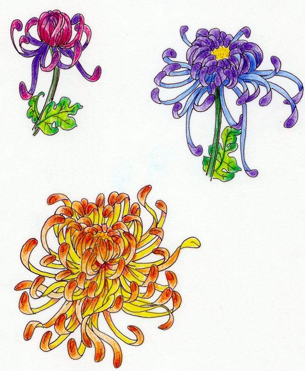 Flor+de+Cris%C3%A2ntemo+Three_Kiku_by_koshii.jpg (600×730)