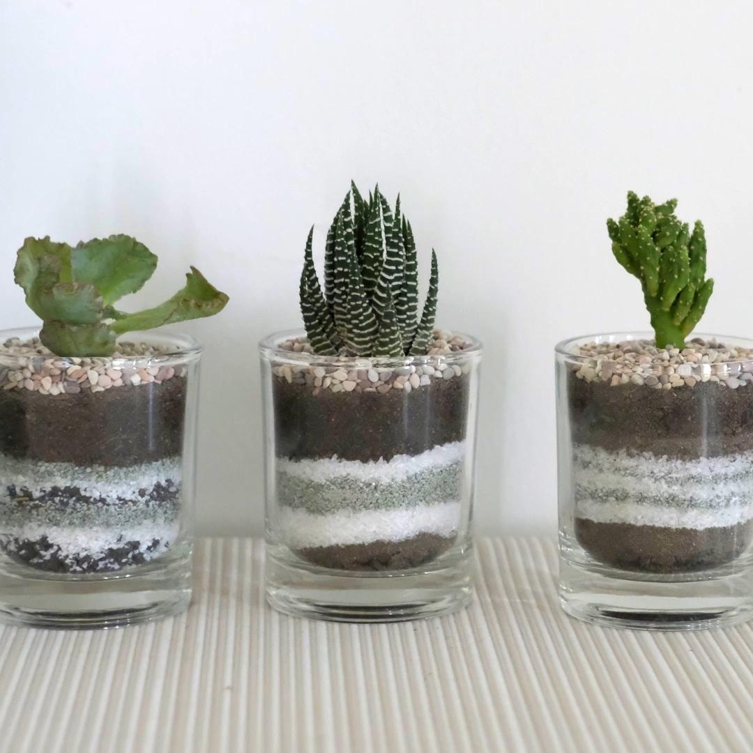 Cara membuat hiasan sukulen mini untuk dekorasi ruangan, ayo kita coba!  Alat dan bahan yang dibutuhkan: - Gelas kecil - Sendok sebagai sekop - Tanaman sukulen - Pasir malang - Pasir biasa - Pasir silika - Kerikil - Tanah media tanam - Kerikil hias  Perawatan: - Simpan di tempat yang terkena matahari secara tidak langsung - Beri air 4-5 tetes setiap 4-5 hari sekali