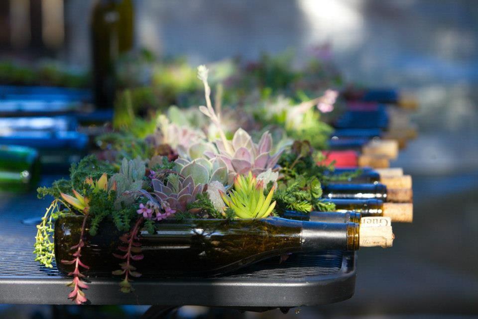 succulent bottle garden