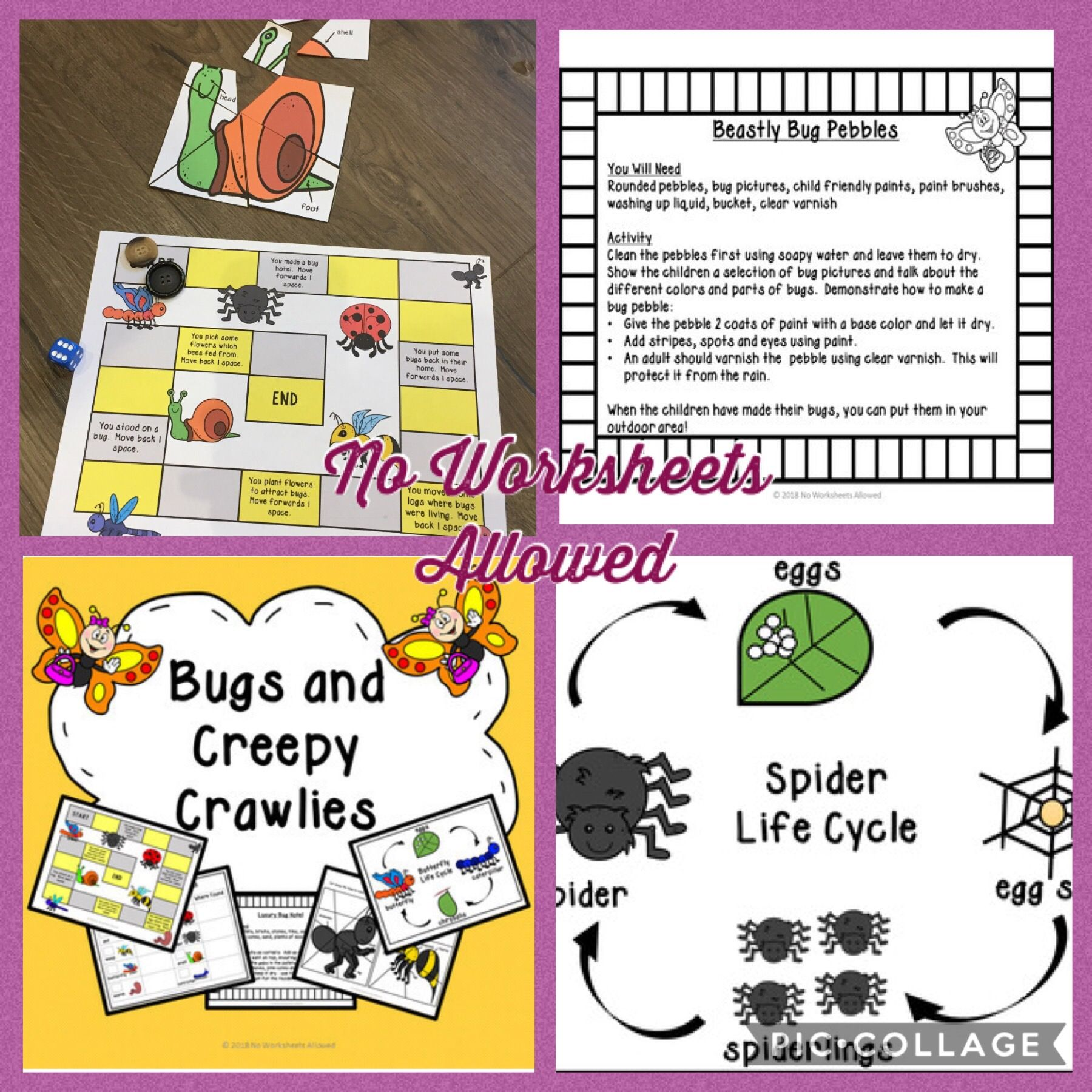 Distance Learning Insects And Bugs Investigations