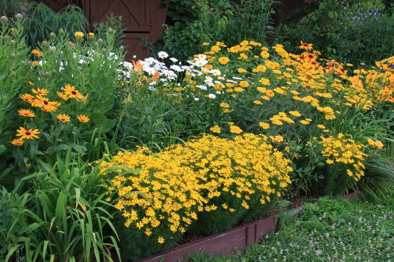 Coreopsis Verticillata Zagreb With Rudbeckia And Achillea Photo By Gottagarden On Gardenweb Coreopsis Moonbeam Outdoor Inspirations Plants