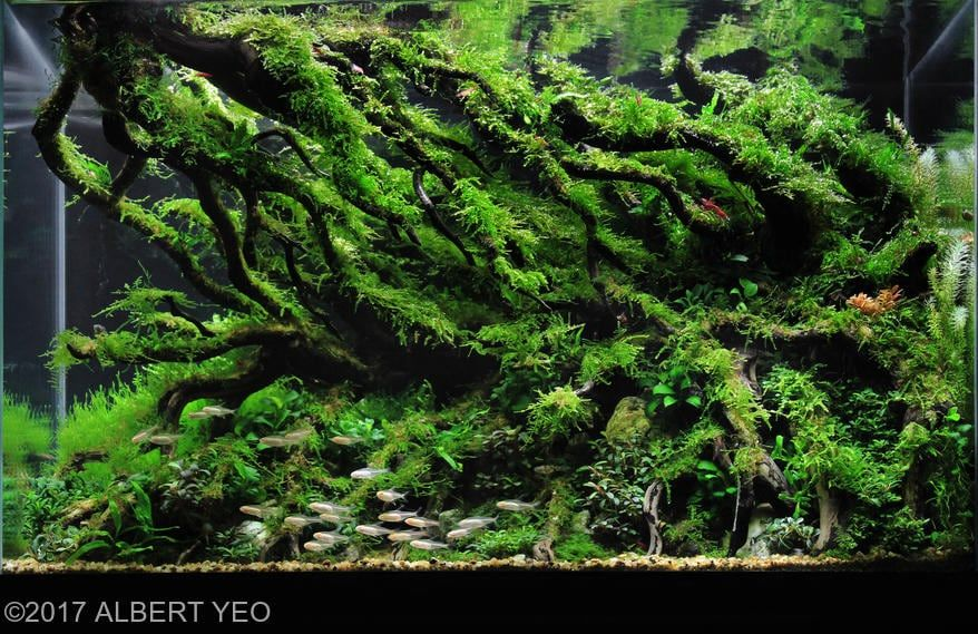 Aquarium Driftwood Used in Aquascaping: Hardscape ...