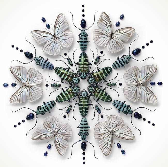 Beautifully Colorful Mosaics and Other Artistic Compositions Made from Exotic Insects by the Artist Christopher Marley