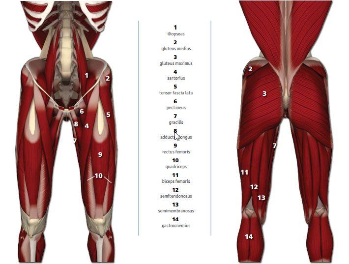 Pin By Blanca Rodriguez On Yoga Yoga Yoga Anatomy Muscle