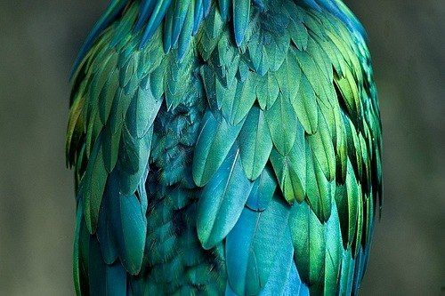 Beautiful colors.........
