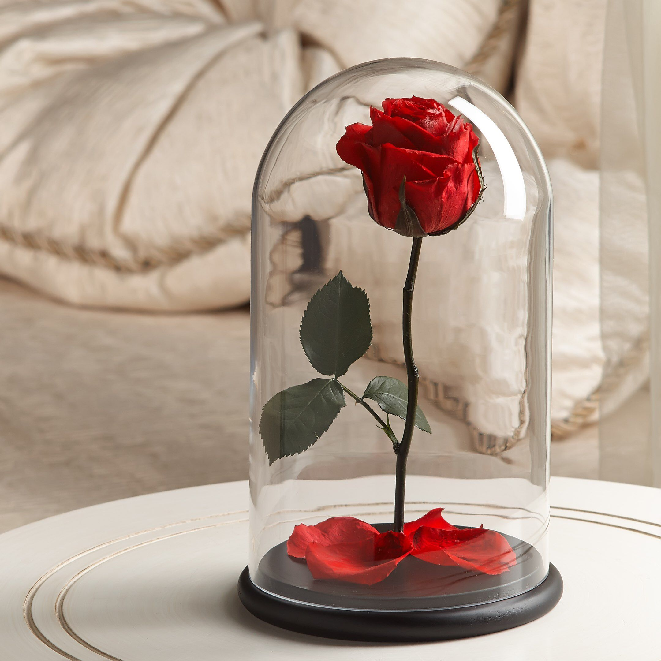 Beauty and the beast rose its a best present for a queen of your beauty and the beast rose its a best present for a queen of your heart izmirmasajfo Choice Image