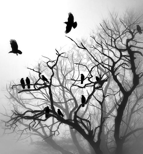 Birds in black and white.