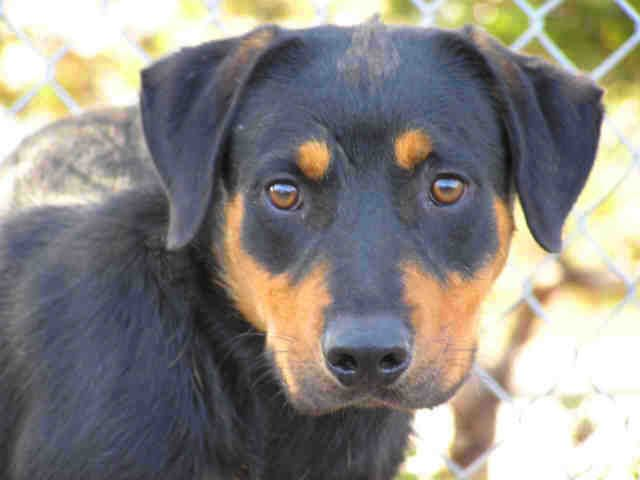 Www Sddac Com My Name Is Skyler I M A Male Black Tan Rottweiler My Age Is 2 Years My Weight Is 46 4 Lbs I M In The Southern Re Dog Sounds Dog Adoption Pets