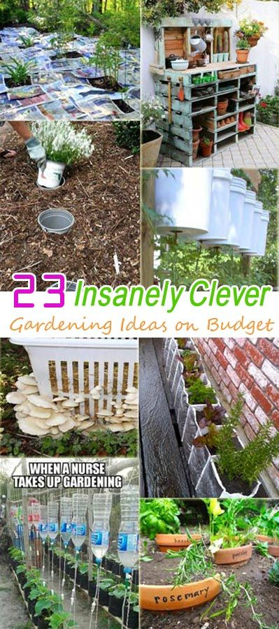 23 Insanely Clever Gardening Ideas on Low Budget | Gardens, Potting ...