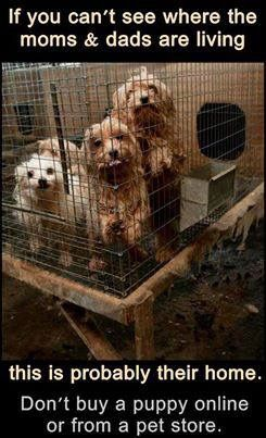 End Puppy Kitten Mills Simply By Going To Your Local Pet Shelter Puppies Dogs Pets