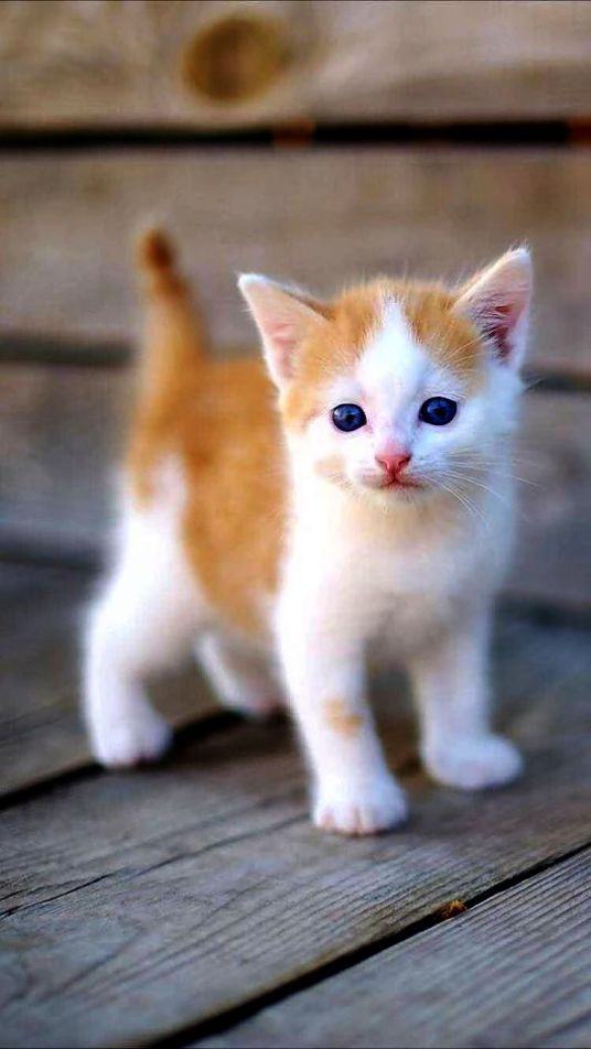 Cute Baby Cute Cat Pictures Wallpaper In 2020 Cute Kittens