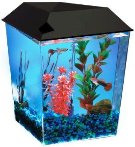 Aquarius1 1 Gallon Tank Aquarium System Aq11104blk With Images Aquarium Systems Aquarium Kit Corner Aquarium