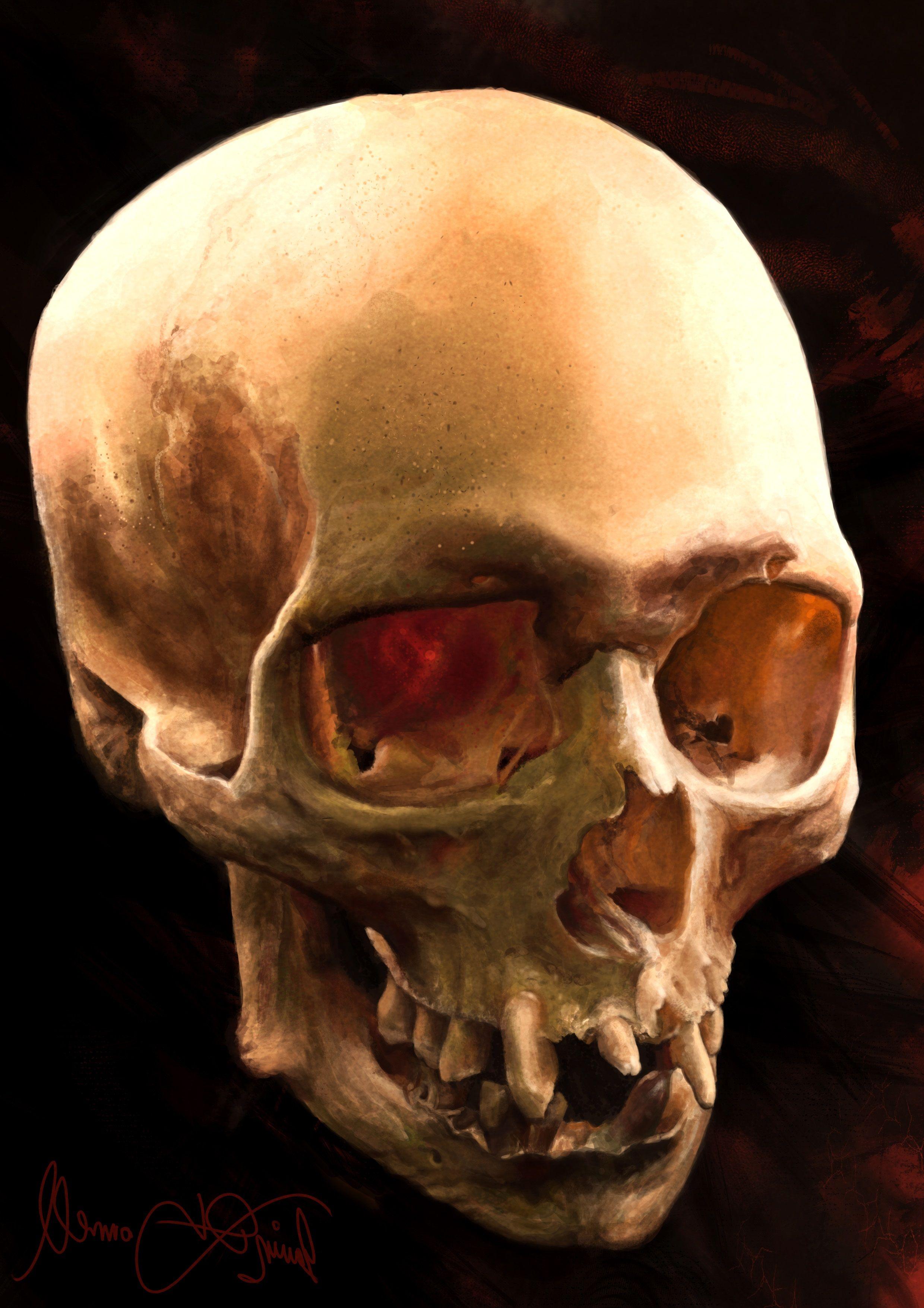 Craneo2 | Skulls | Pinterest | Calaveras, Anatomía y Craneo anatomia