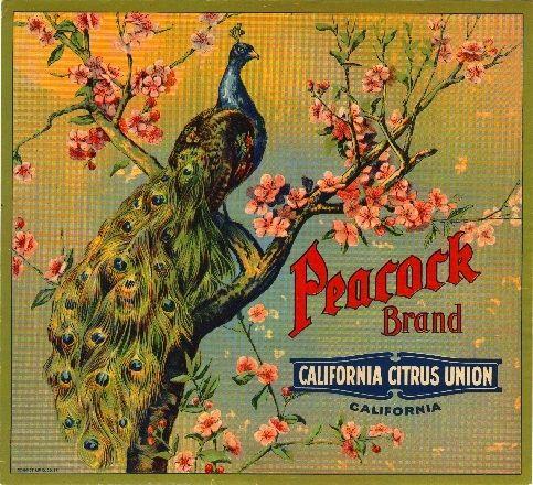 Riverside Peacock 2 Orange Citrus Fruit Crate Label Art Print   eBay