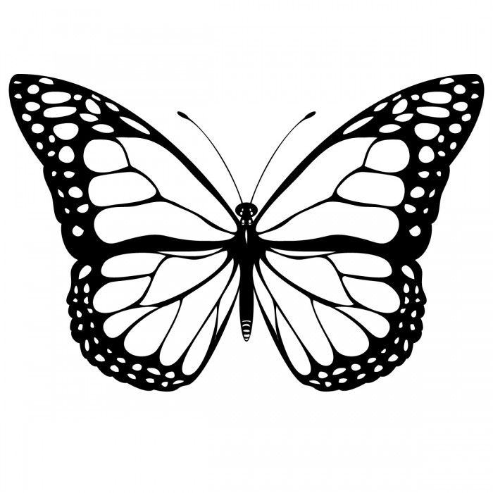 Painted Lady Butterfly Coloring Pages Butterfly Clip Art
