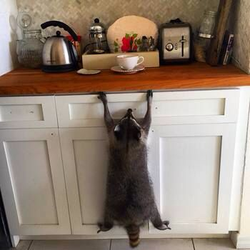 Me in the morning. Must...reach...coffee.