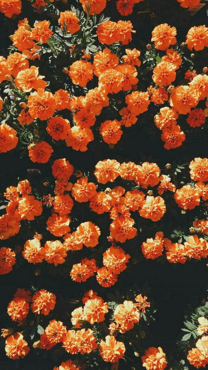 Pinterest Madisondaniel2 Orange Wallpaper Flower Aesthetic