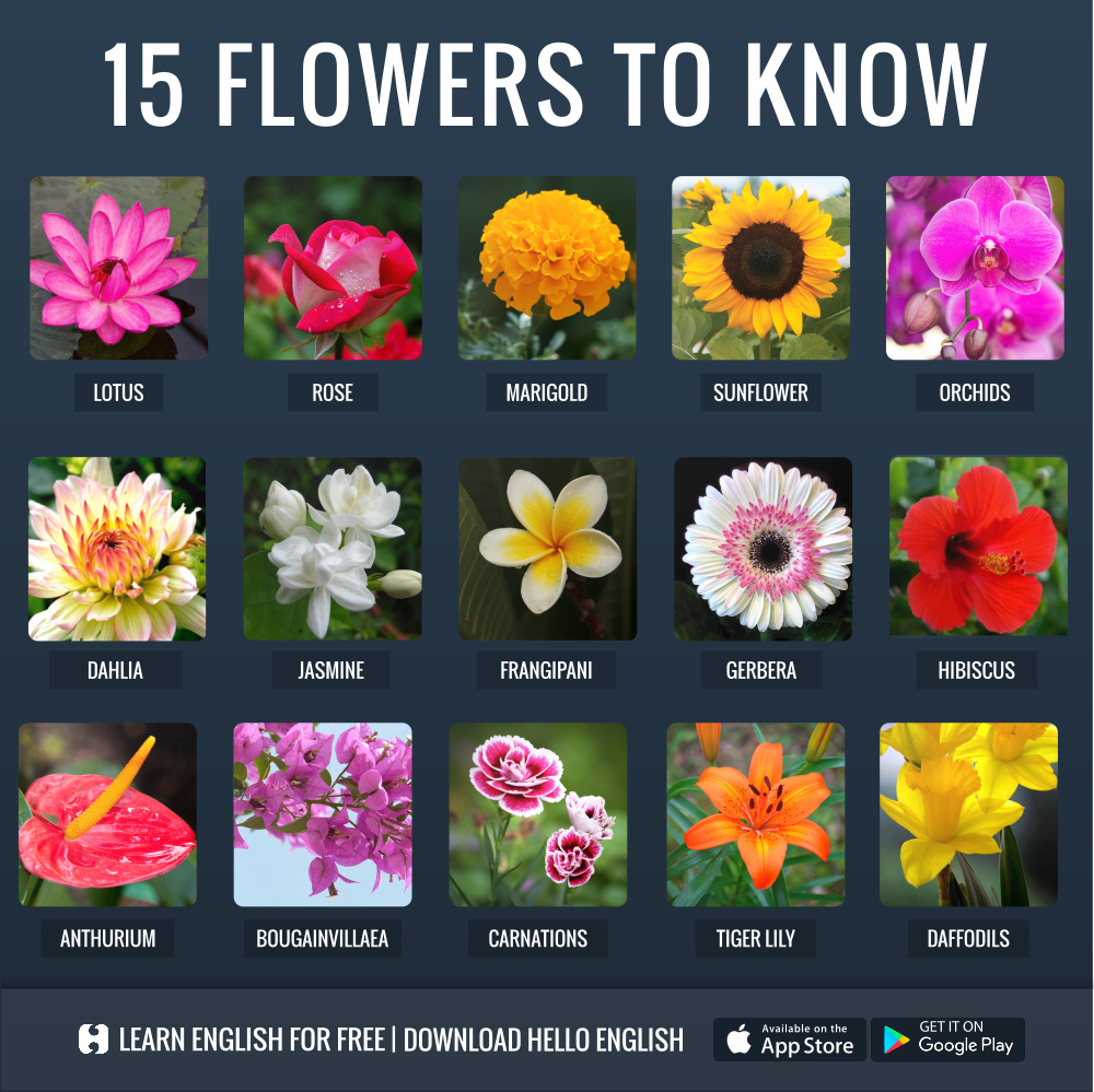 Pin By Maria Blanaru On English Learn English Hello English App Flowers Name In English
