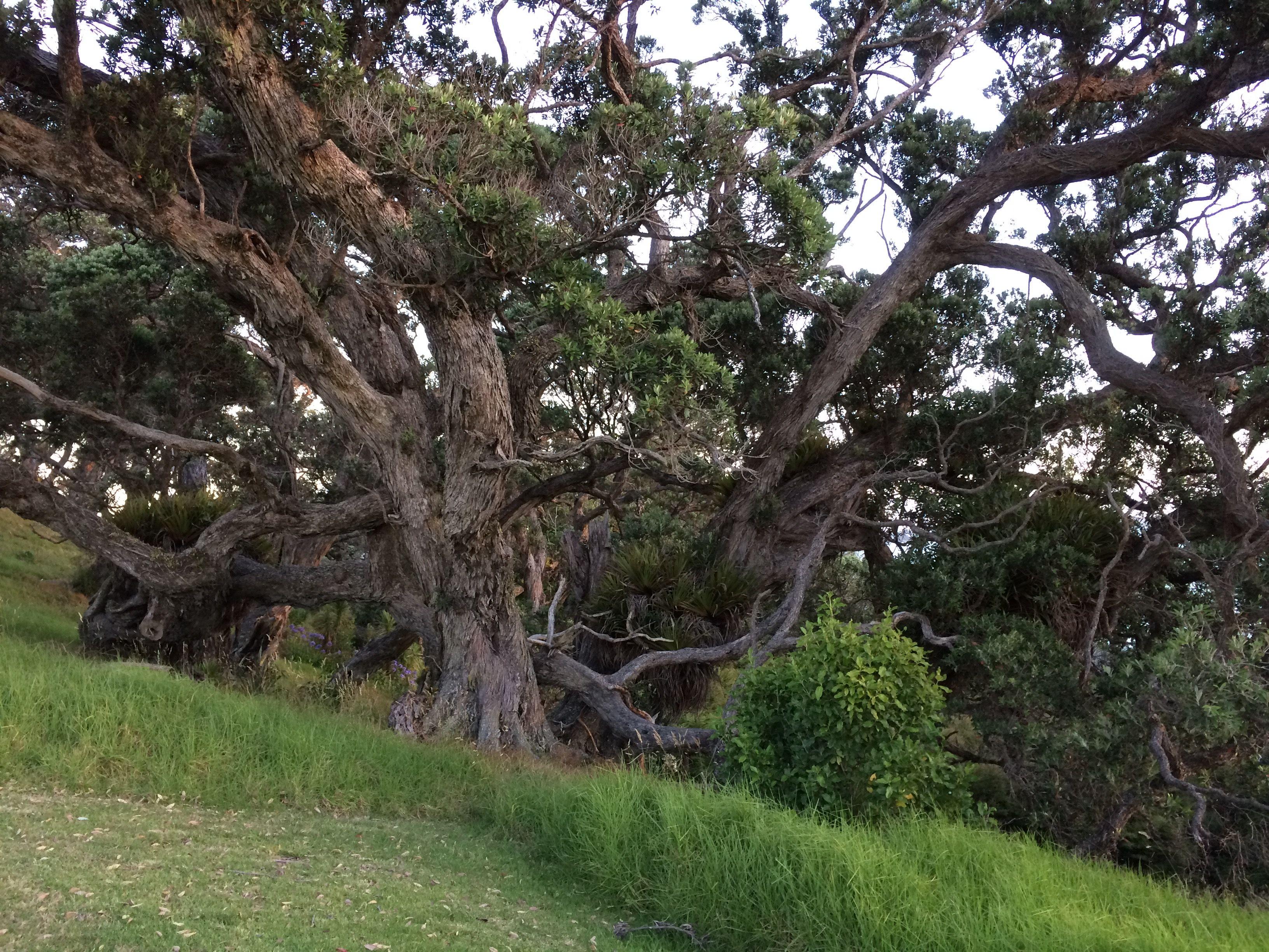 Scandrett Regional Park, New Zealand New zealand
