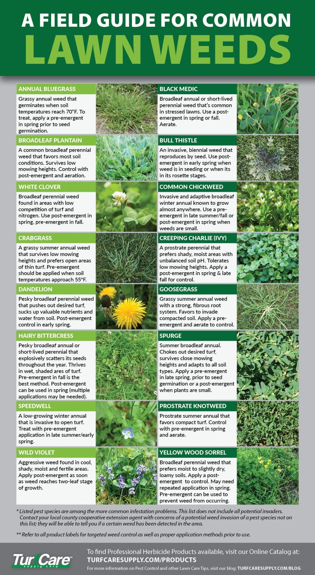 A Field Guide for Common Lawn Weeds - Turf Care Supply