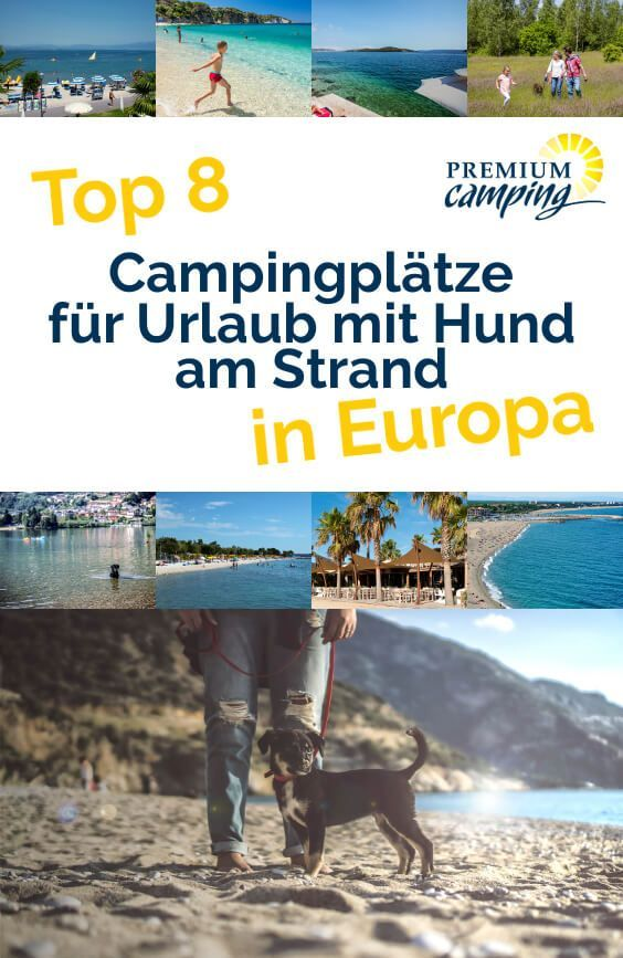 Premium Camping with Dog on the Beach: The 8 Most Popular Campi ...-Premium Camping mit Hund am Strand: Die 8 beliebtesten Campingplätze Premium camping with dogs on the beach: the 8 most popular campsites -