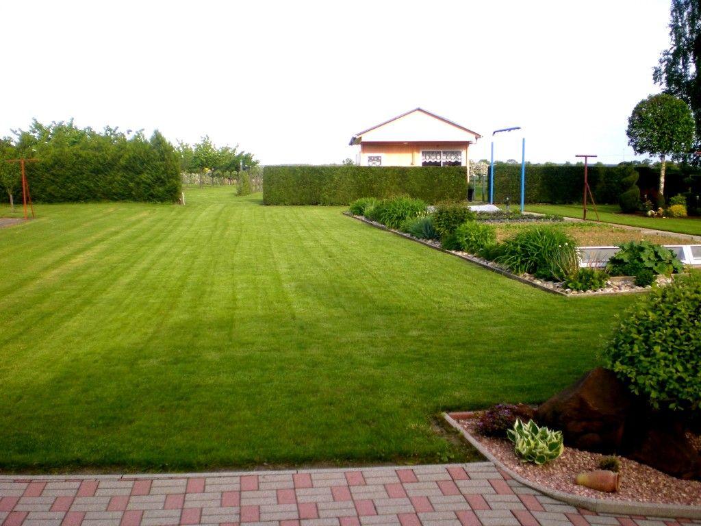 Comment Rajeunir Une Vieux Gazon Gazon Scarifier Pelouse Jardins