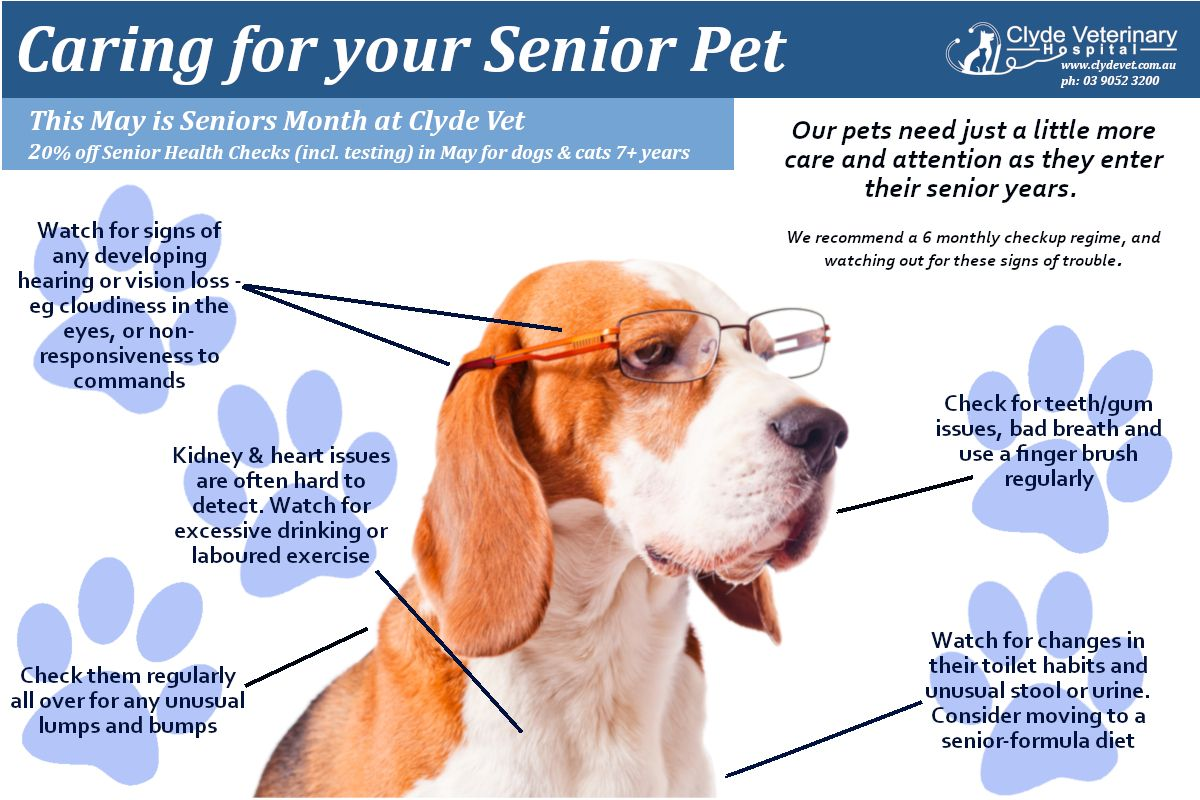 Older Pets Have Special Needs And We Re Not Just Talking About The Reading Glasses There S No Specific Age At Which You Shou Pets Dog Stories Dogs