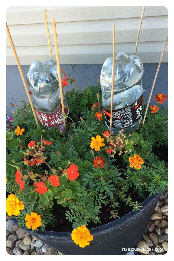 Houseplants in bottles how to grow plants in water