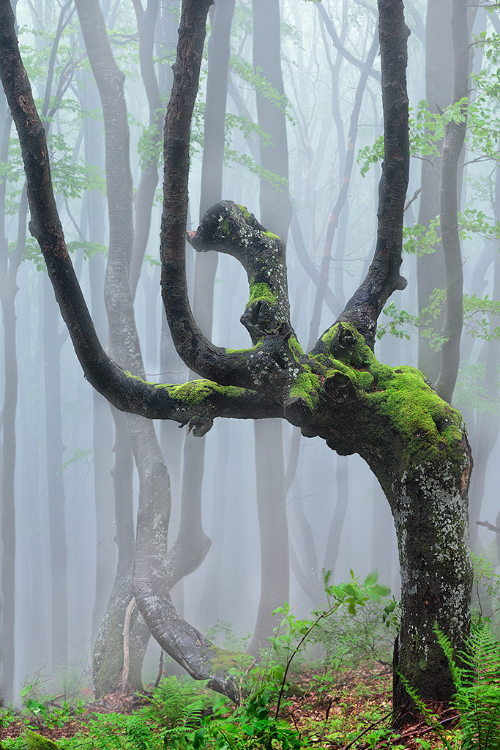 ~~Forest Spirits by Acts Kosev~~