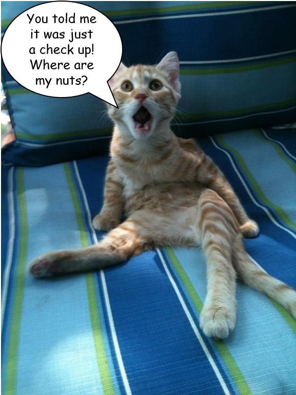 Poor Kitty Funny Animal Jokes Funny Animal Quotes Funny Animals