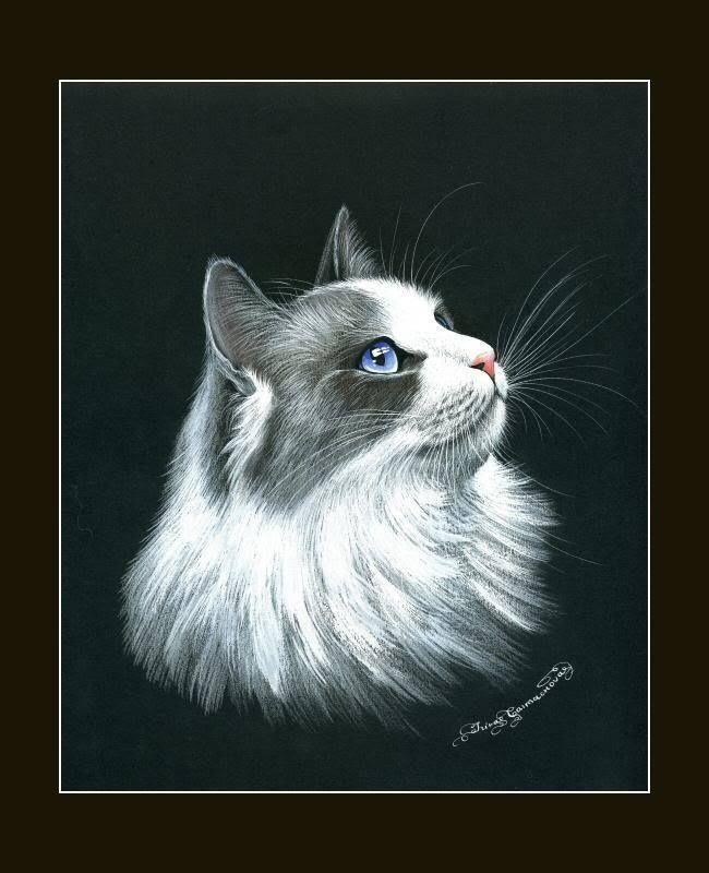 Ragdoll Cat Noble Print by I Garmashova