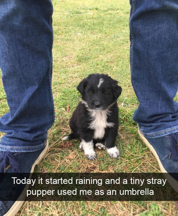 Photo of 150 Funny Animal Snapchats Pictures – Funnyfoto | Funny Pictures – Videos – Gi…