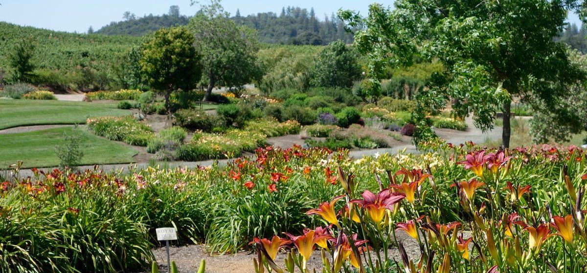 Amador flower farm amador county summer road trip trip