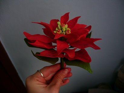 Vianočná ruža , Kvety, fotopostupy | Tortyodmamy.sk