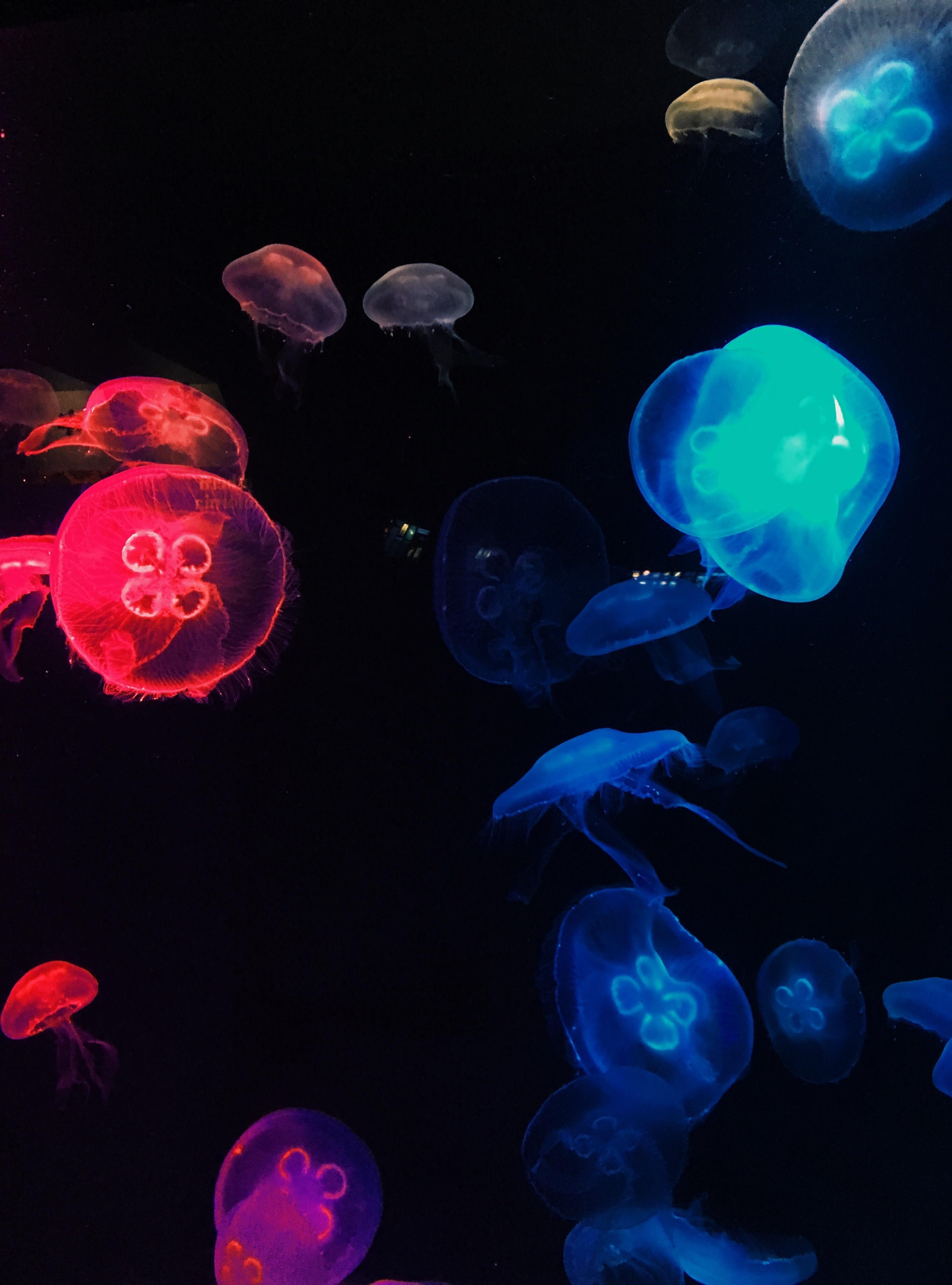 62f25eb14b91863f80626605fe80e2fb Frais De Aquarium Osaka Concept