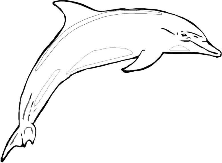 Dolphin Coloring Sheets to Print | shark coloring pages, fish ...